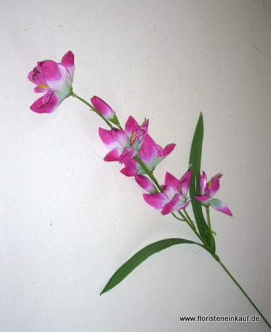Orchidee Dendrobie, 60cm, pink