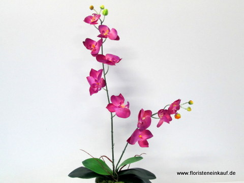 Orchidee Phalaenopsis 60cm, dark/purple