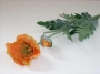 Mohn x2, 72cm, orange