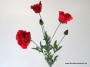 Mohn x5, 75cm, rot-combination